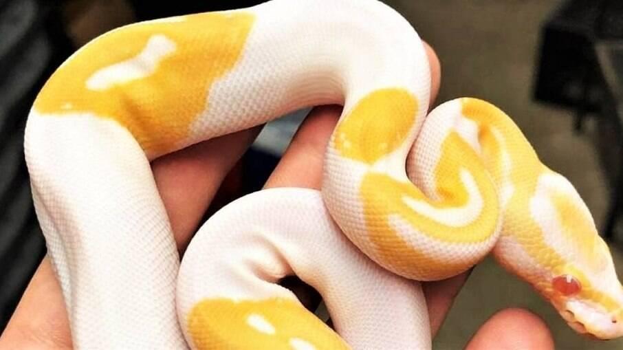 A cobra chamou a atenção dos usuários pelo formato das manchas em seu corpo