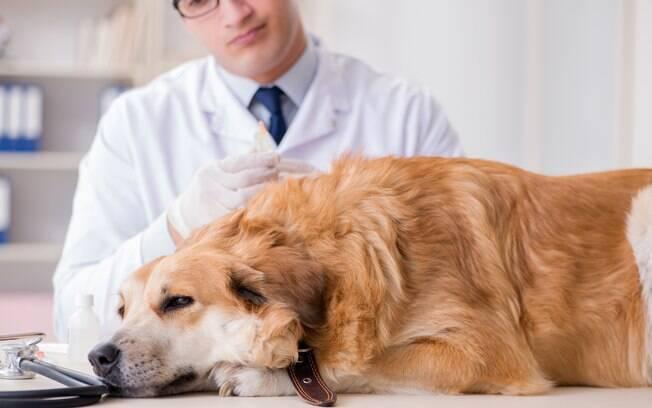 Para chegar ao diagnóstico do problema, o veterinário precisará analisar outros parâmetros relevados nos exames e os sintomas apresentados pelo animal