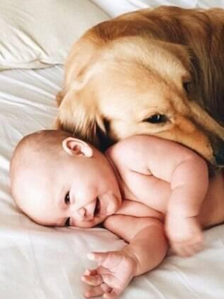 Se tudo for feito da maneira correta, não haverá problemas com o cão e a chegada do bebê