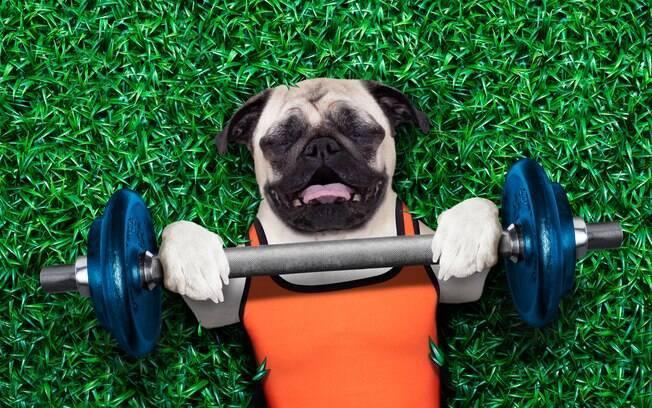 A academia para cães não é igual àquelas feitas para os humanos, mas sim construída a partir das necessidades dos pets