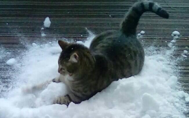 Dibs, o gato que ama neve, na neve