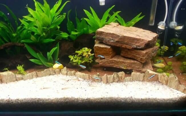 peixes no aquário
