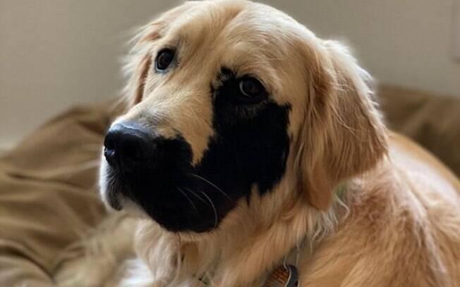 Cãozinho com mancha no rosto encanta internautas pela fofura