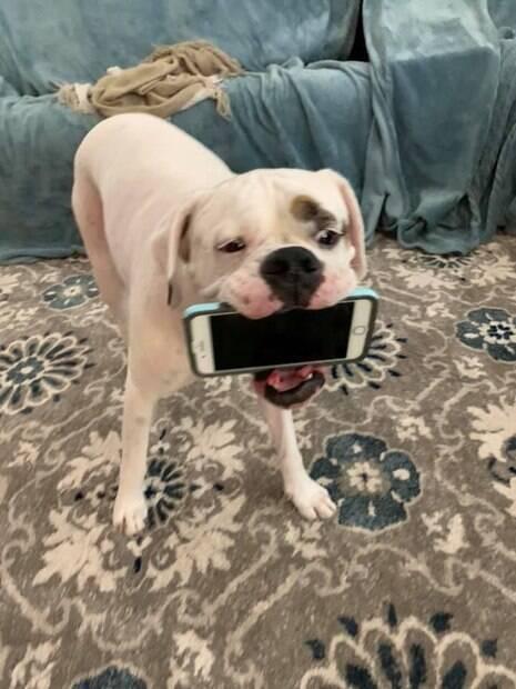 boxer com celular na boca