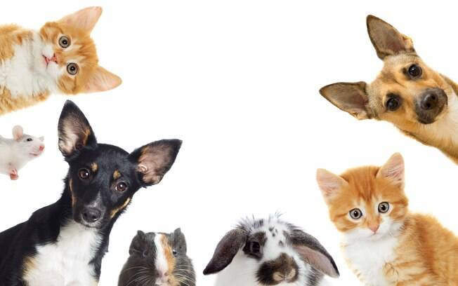 Dia 14 de março é comemorado o Dia Nacional dos Animais