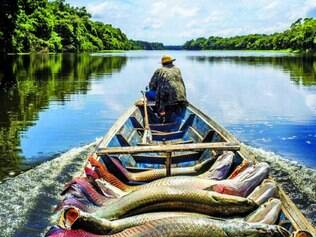 Colaboração. Pescador do lago do Macaco, na Amazônia, respeita cotas de pesca para preservar um dos maiores peixes de água doce do mundo