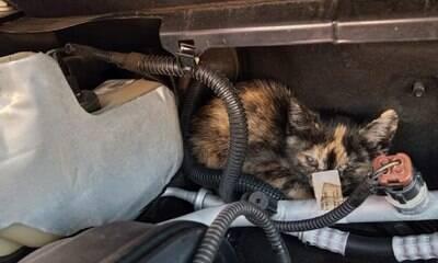 ONG alerta para gatos que se escondem no motor dos carros no frio