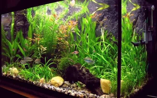 O filtro para aquário é um aparelho muito importante para a vida dos peixes