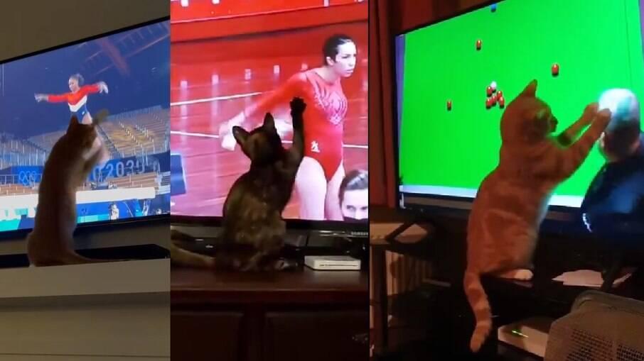 Gatos assistindo aos jogos olímpicos viralizam nas redes sociais