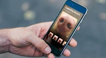 App que escaneia o focinho ajuda a encontrar pets perdidos