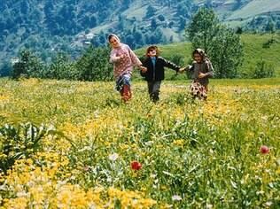 Para criar um jardim dos sentidos como o do filme iraniano 'A Cor do Paraíso' é preciso ter espécies com perfumes, florações e texturas diferentes