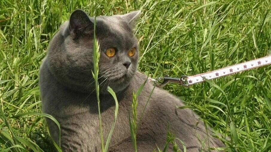 Cuidado com lugares com buracos ou moitas que possam servir de esconderijo para os felinos