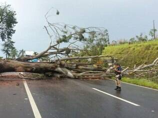 Árvore cai e deixar BR-381 interditada por mais de três horas