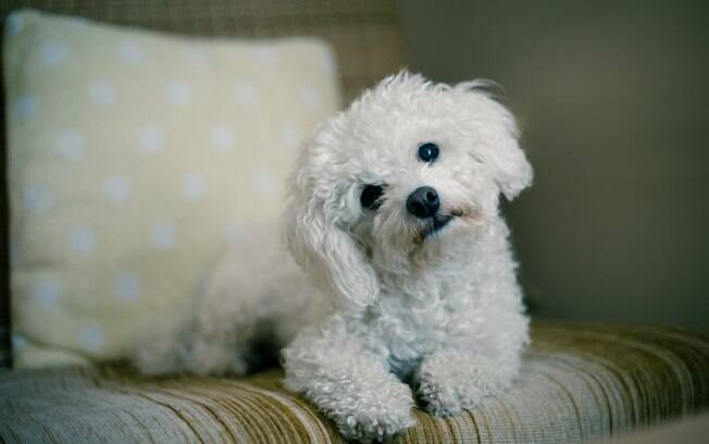 Inclinar a cabeça para o lado é um gesto bem comum, mas muitos donos não entendem o motivo desse comportamento canino