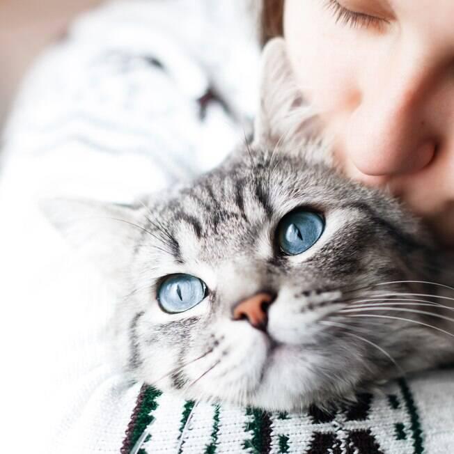 Não use roupa no seu gato!