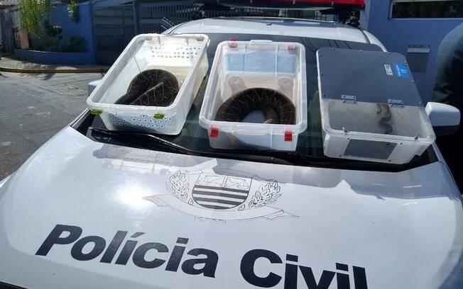 Polícia de Mogi das Cruzes prende suspeito de criar três cobras ilegalmente e usá-las para atacar animais em vídeos para internet