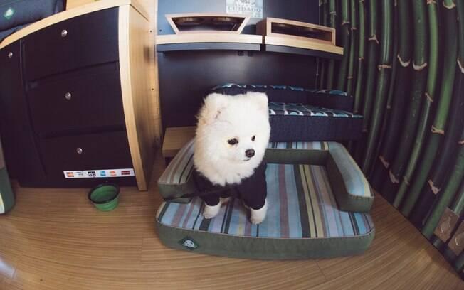 Espaço Pet Friendly no Churras Fest