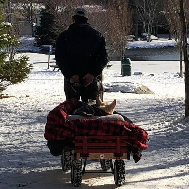Homem levando cão para passear em carrinho