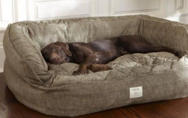A escolha da cama para cachorro não pode ser feita de acordo com a beleza
