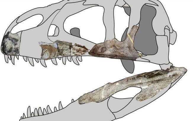 Dinossauro carnívoro descoberto tailândia