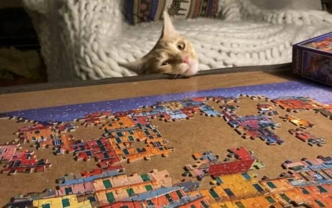 Donos compartilham momentos de seus gatos destruindo quebra-cabeças