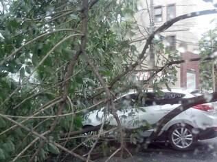 Árvore caiu sobre carros por causa da chuva