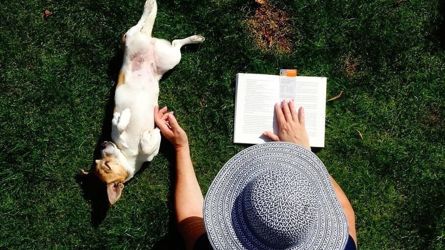 Jack Russell Terrier é um grande companheiro para os tutores
