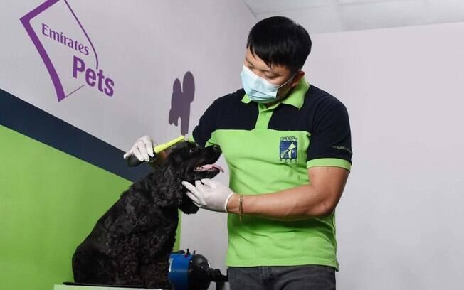 Companhias aéreas oferecem serviço de transporte exclusivo para animais
