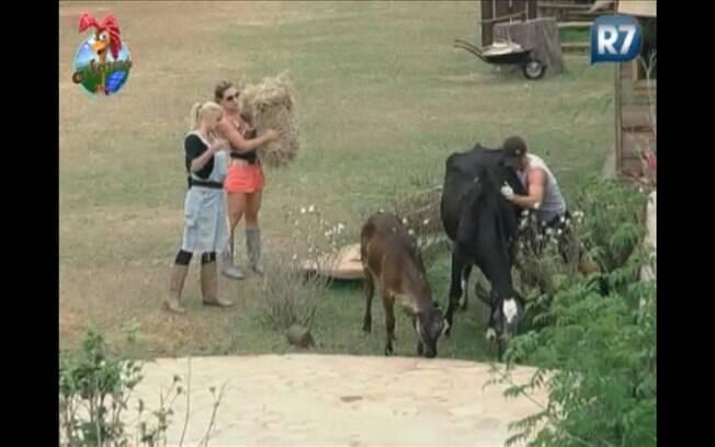 ...depois, o único peão da casa tenta o mesmo, mas não consegue tirar a vaca do lugar...