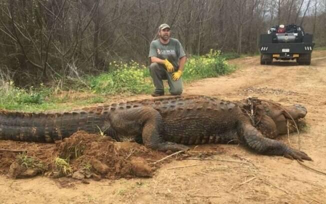 O jacaré foi capturado por um biólogo especializado em vida selvagem