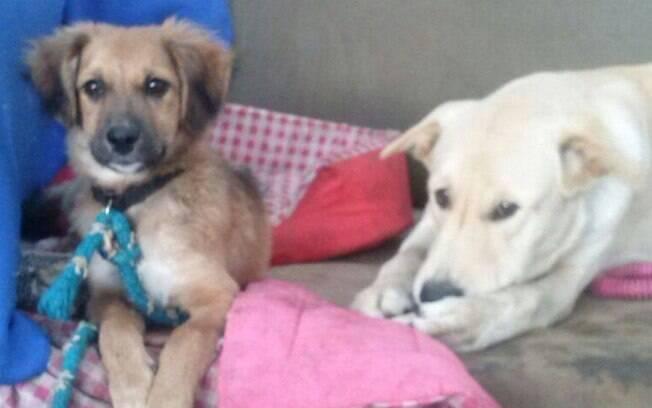 A ONG Reciclando o Planeta resgata cães abandonados