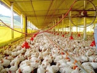A carne de frango teve destaque nas exportações, com US$ 617 milhões em receita