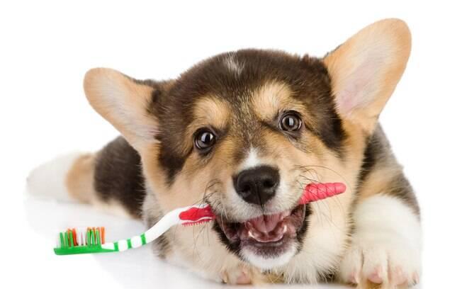 Cuidar dos dentes de cães é muito importante para a saúde deles
