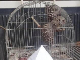 Suspeito afirmou que soltaria o filhote de coruja em breve