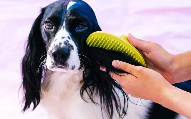 Por mais que não seja recomendado tosar o cachorro no verão, escovar é muito importante para eliminar os fios mortos e evitar o acúmulo deles