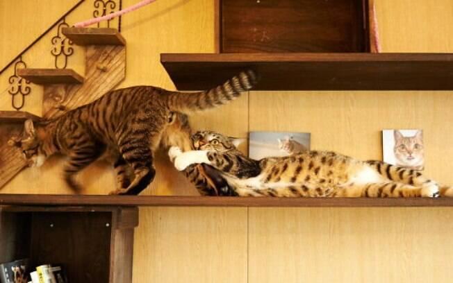 Gatos tão dramáticos que merecem ganhar um Oscar!