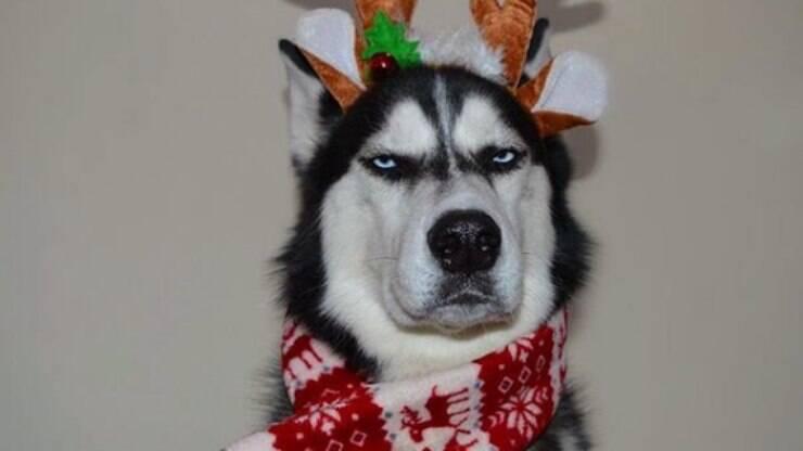 Família Tenta Fazer Cartão De Natal Com Cão E Resultado é