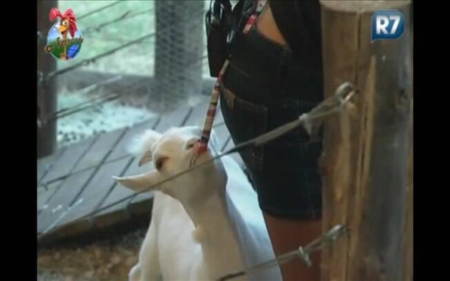 Cabra puxa o cordão do biquíni enquanto Raquel executa distraidamente sua tarefa