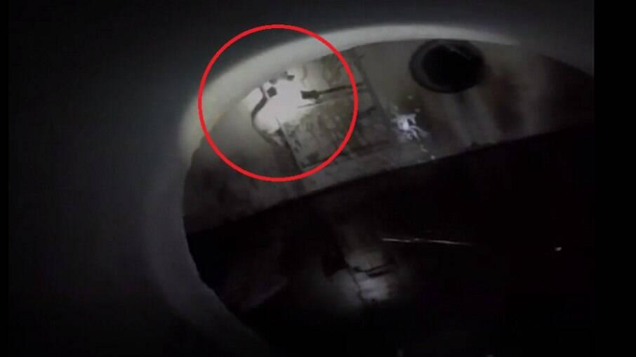 O filhote ficou agarrado a uma escada na tubulação, para não cair na água suja, onde certamente se afogaria