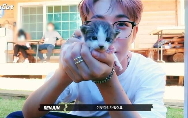 Gatinhos! Filhotinhos encantam astros e fãs de K-Pop