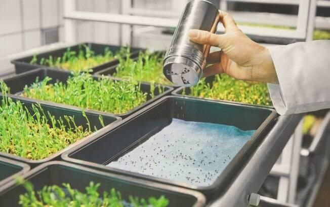 Modelo de fazenda vertical democratiza o cultivo domiciliar