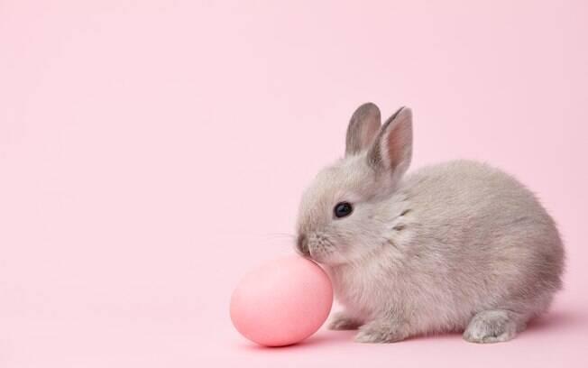Dar coelhos de presente de Páscoa não é uma prática saudável para o animal