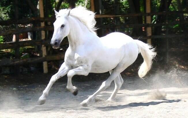 Raça de cavalo: Andaluz