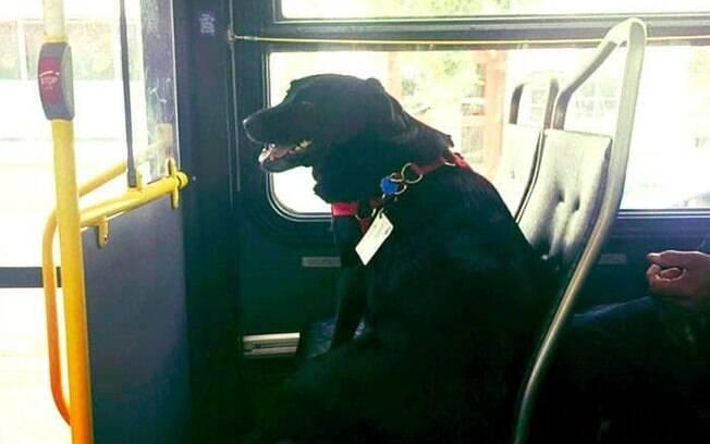 Cadela dentro de ônibus
