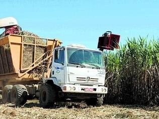 Demanda. Produção de cana-de-açúcar movimenta hoje a economia de  120 municípios  do Estado