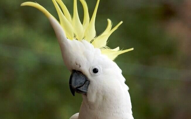 A cacatua é uma ave que está na lista dos animais exóticos que você pode ter em casa