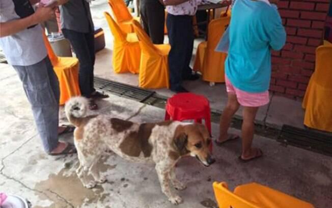 Cão segue funeral de tutora e mostra como é ser um melhor amigo