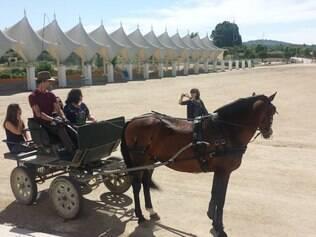Na Coutelaria Alter, passeio de charrete puxado por cavalo lusitano agrada aos visitantes
