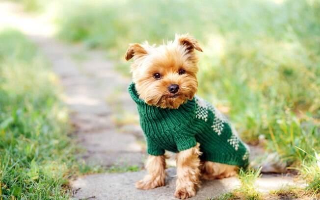 Caso não saiba o que está deixando seu cachorro com soluço, o melhor será consultar um profissional para descartar a presença de doença