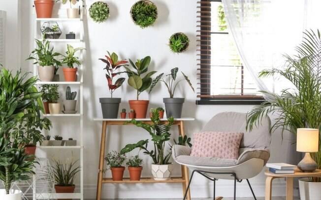 5 plantas para adotar na sua decoração